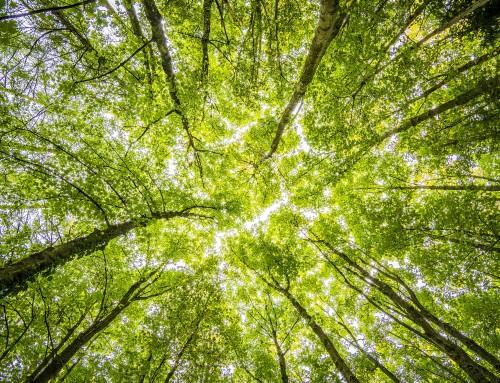 De bomen groeien tot aan de hemel